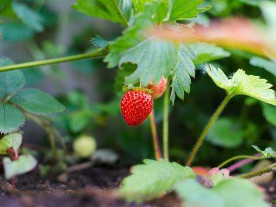 Tour a fraisier : Comment fabriquer une tour à fraisier en forme de pyramide ?